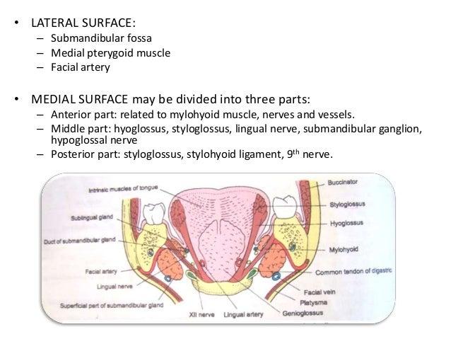 Imaging of salivary gland tumours