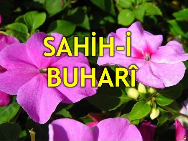 İmam Buhari