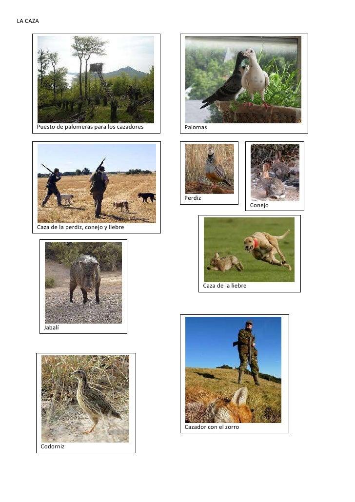 Imágenes de la caza