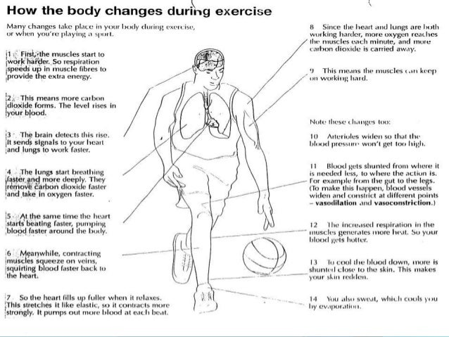 effects of exercise on body Aerobic exercise activates your immune system in a good way this may leave you less susceptible to minor viral illnesses, such as colds and flu reduce your health risks aerobic exercise reduces the risk of many conditions, including obesity, heart disease, high blood pressure, type 2 diabetes, metabolic syndrome, stroke and certain types of cancer.