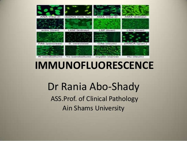 IMMUNOFLUORESCENCE Dr Rania Abo-Shady ASS.Prof. of Clinical Pathology Ain Shams University