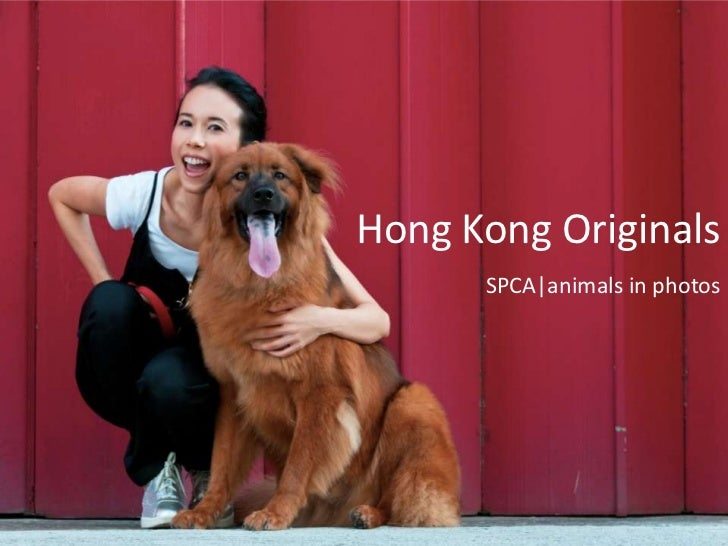 Hong Kong Originals      SPCA animals in photos