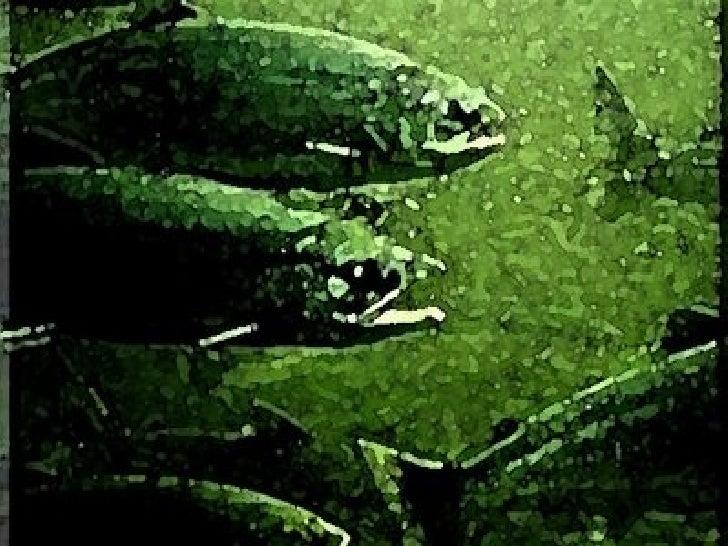 Impacto De La Salmonicultura Final