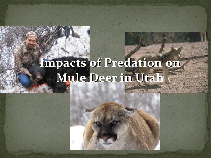 Impacts of Predation on Mule Deer in Utah, April 2011