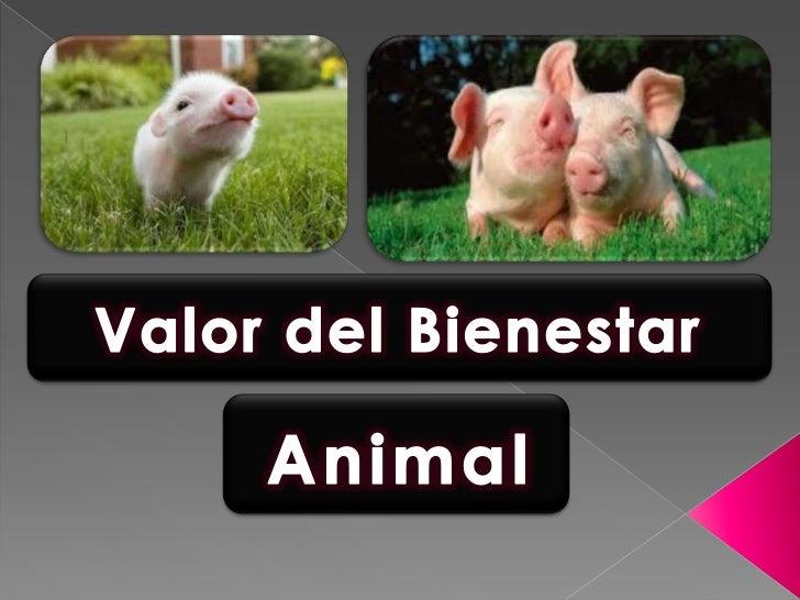 Valor del bienestar animal