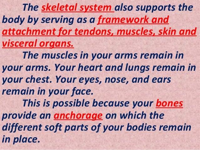 Skeletal system essay