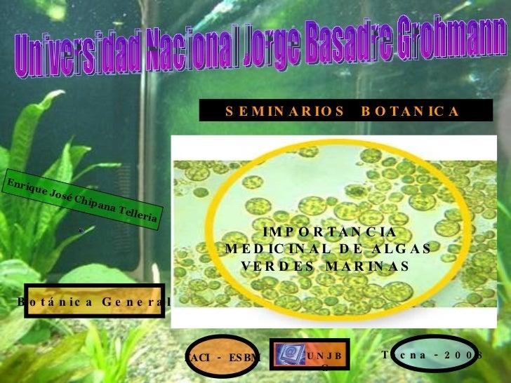 Importancia Medicinal De Las Algas Verdes Marinas
