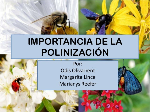 Por: Odis Olivarrent Margarita Lince Marianys Reefer IMPORTANCIA DE LA POLINIZACIÓN