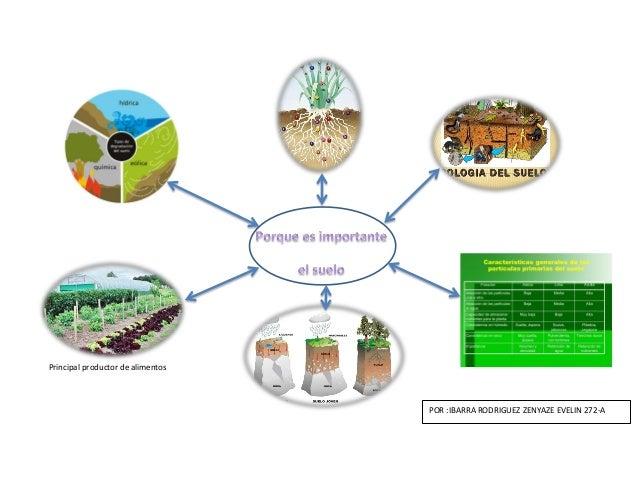 Importancia del suelo quimica ii for Importancia de los suelos