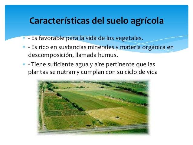 Importancia del suelo agr cola y la agricultura for Caracteristicas de los suelos