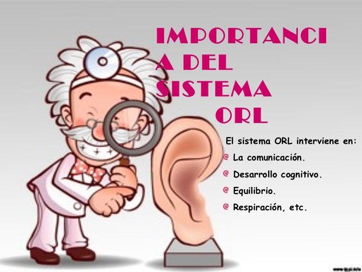 IMPORTANCIA DELSISTEMA    ORL    El sistema ORL interviene en:     La comunicación.     Desarrollo cognitivo.     Equilibr...