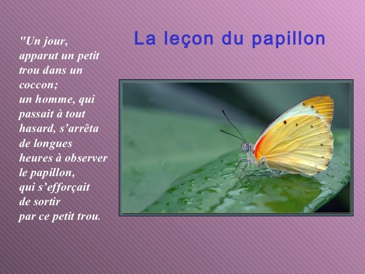 Important morale du papillon