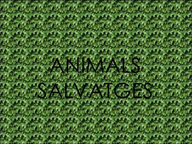 Impress Animals Salvatges