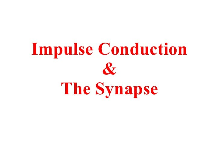 Impulse Conduction & The Synapse