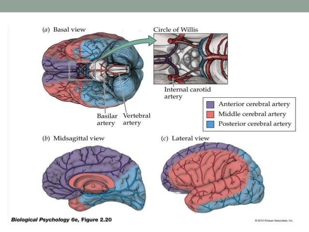 Orbital Prefrontal Circuit Circuit Lateral Prefrontal