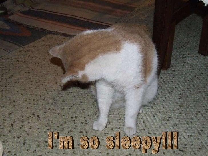I'm so sleepy!