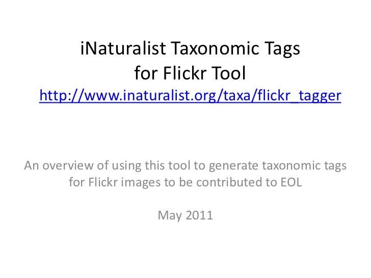 iNaturalist Taxonomic Tags for Flickr Toolhttp://www.inaturalist.org/taxa/flickr_tagger<br />An overview of using this too...