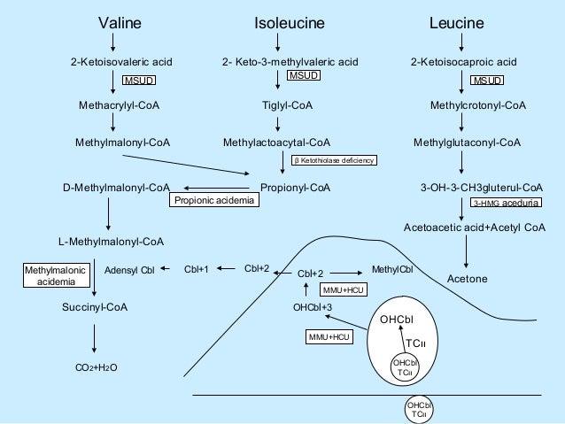 Valine Leucine And Isoleucine Metabolism Valine Isoleucine Leucine