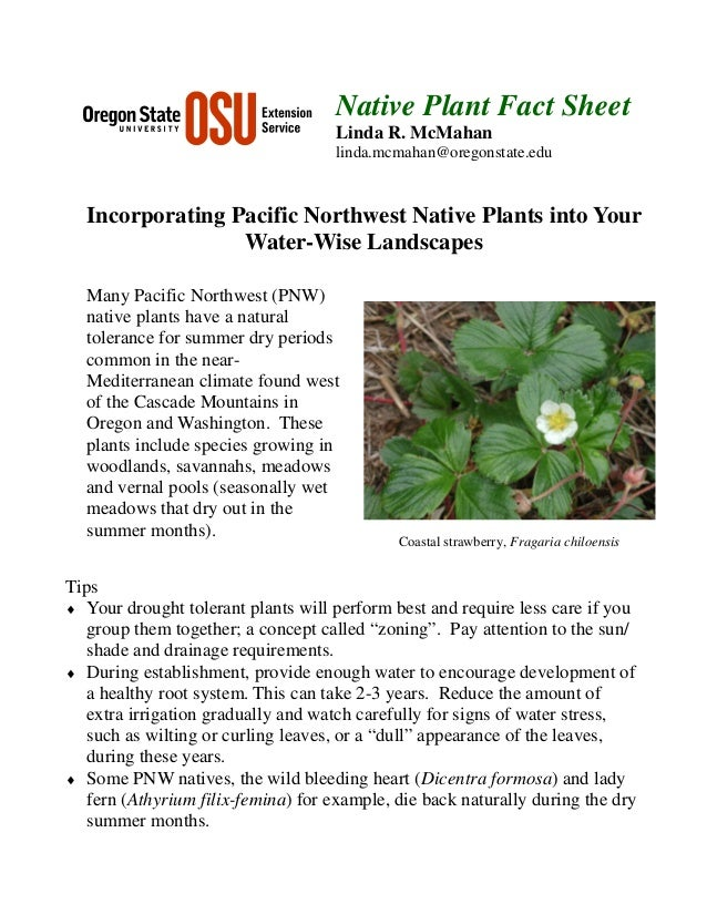 Incorporating Pacific Northwest Native Plants Into Your Water-Wise Landscapes