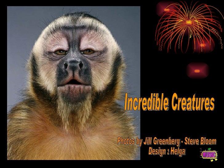 Incredible Creatures Photos by Jill Greenberg - Steve Bloom Design : Helga