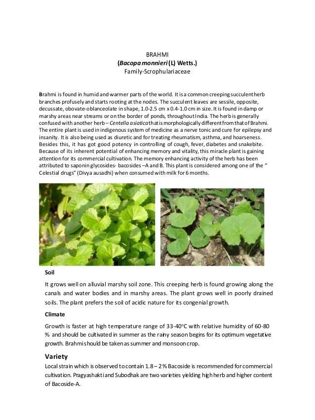 BRAHMI                                 (Bacopa monnieri (L) Wetts.)                                   Family-Scrophulariac...