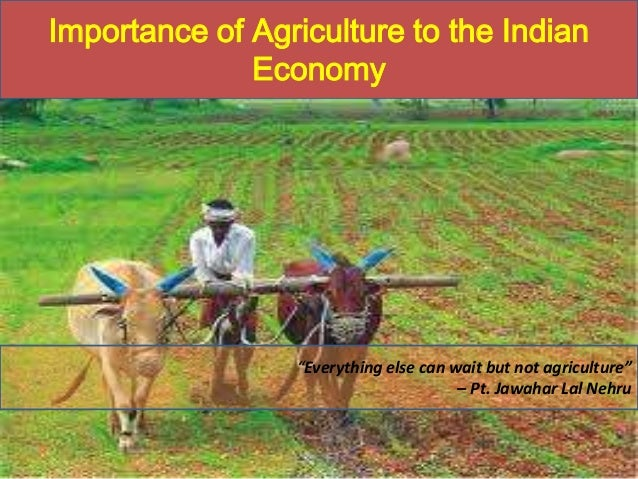 """Importance of Agriculture to the Indian Economy  """"Everything else can wait but not agriculture"""" – Pt. Jawahar Lal Nehru"""