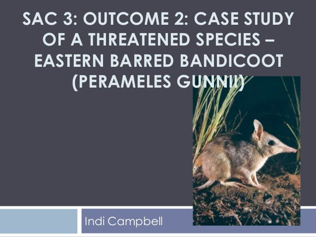 Eastern Barred Bandicoot - student presentation