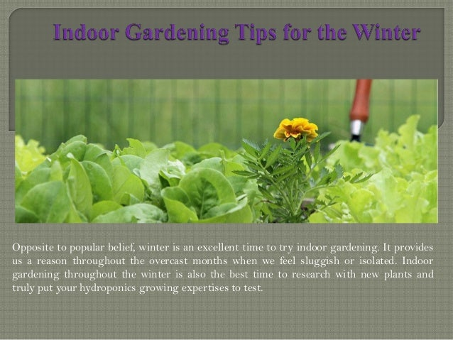 indoor gardening tips for the winter