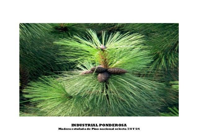 INDUSTRIAL PONDEROSA Madera estufada de Pino nacional selecta 7/8 Y 5/4
