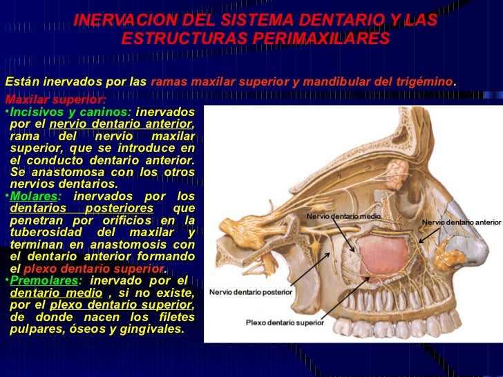 Sheynyy la osteocondrosis s2-s4