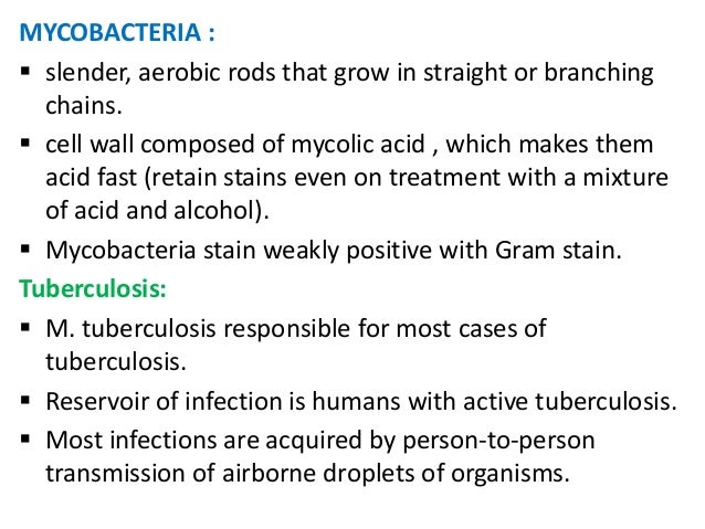 MYCOBACTERIA : slender, aerobic rods that grow in straight or branching  chains. cell wall composed of mycolic acid , wh...