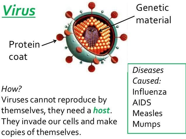 Influenza Protein Coat Material Protein Coat How