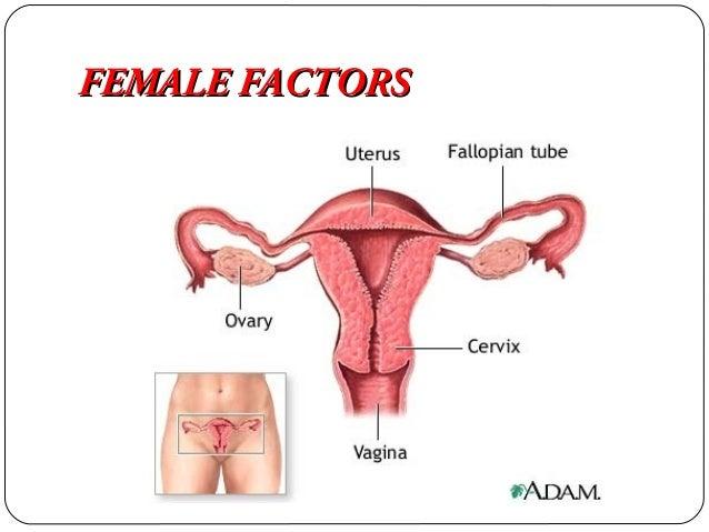 Infertile Cervical Mucus Transport Cervical Mucus