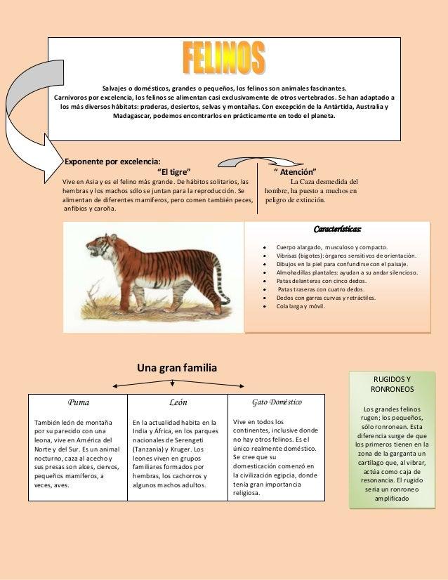Salvajes o domésticos, grandes o pequeños, los felinos son animales fascinantes.       Carnívoros por excelencia, los feli...