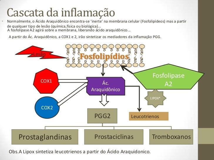 antiinflamatorios para perros no esteroideos