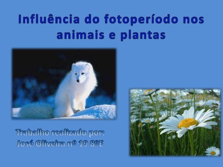 Foto período é período de luz em cada 24 horas do dia.Os animais e as plantas apresentam fotoperiodismo, isto é, capacidad...