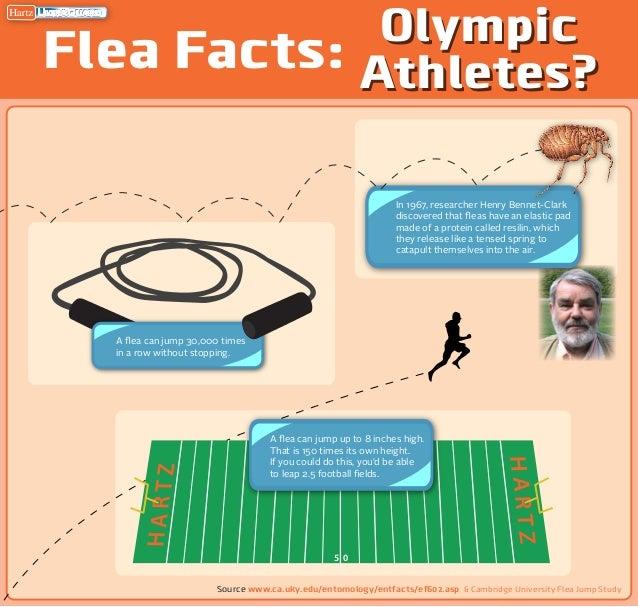 Hartz Mountain Infographic - Flea Facts