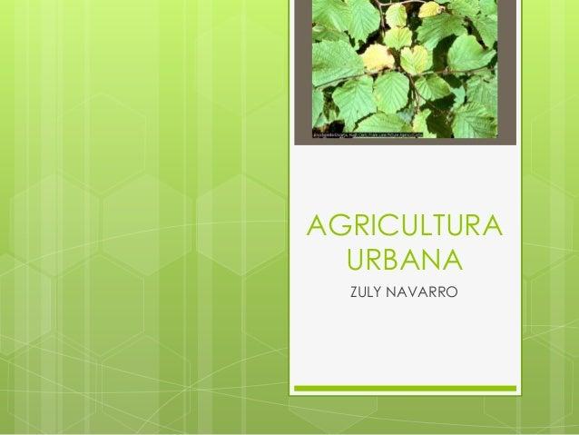 AGRICULTURA  URBANA  ZULY NAVARRO