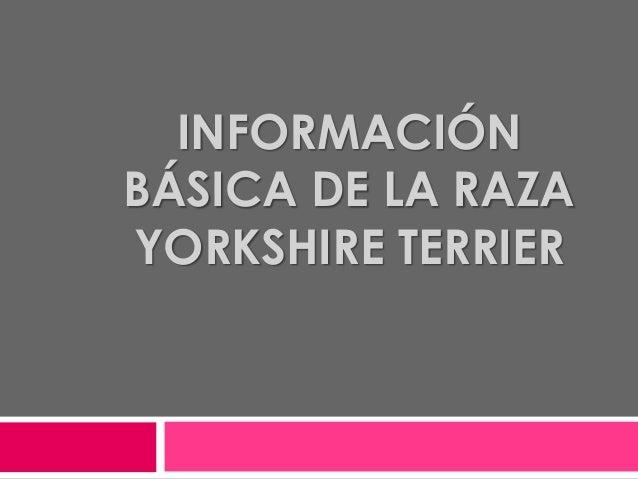 INFORMACIÓNBÁSICA DE LA RAZAYORKSHIRE TERRIER