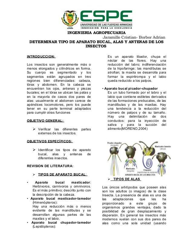 INGENIERIA AGROPECUARIA Jaramillo Cristian- Borbor Adrian DETERMINAR TIPO DE APARATO BUCAL, ALAS Y ANTENAS DE LOS INSECTOS...