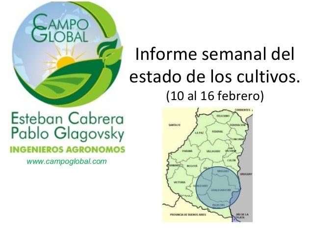 Informe semanal del                      estado de los cultivos.                          (10 al 16 febrero)www.campogloba...
