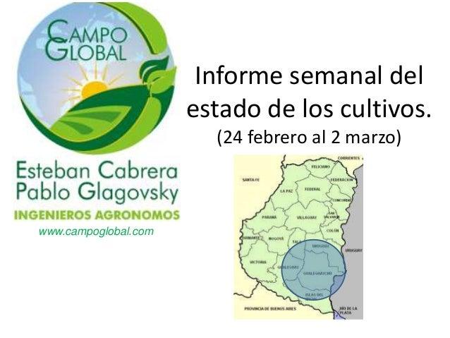 Informe semanal del                      estado de los cultivos.                        (24 febrero al 2 marzo)www.campogl...