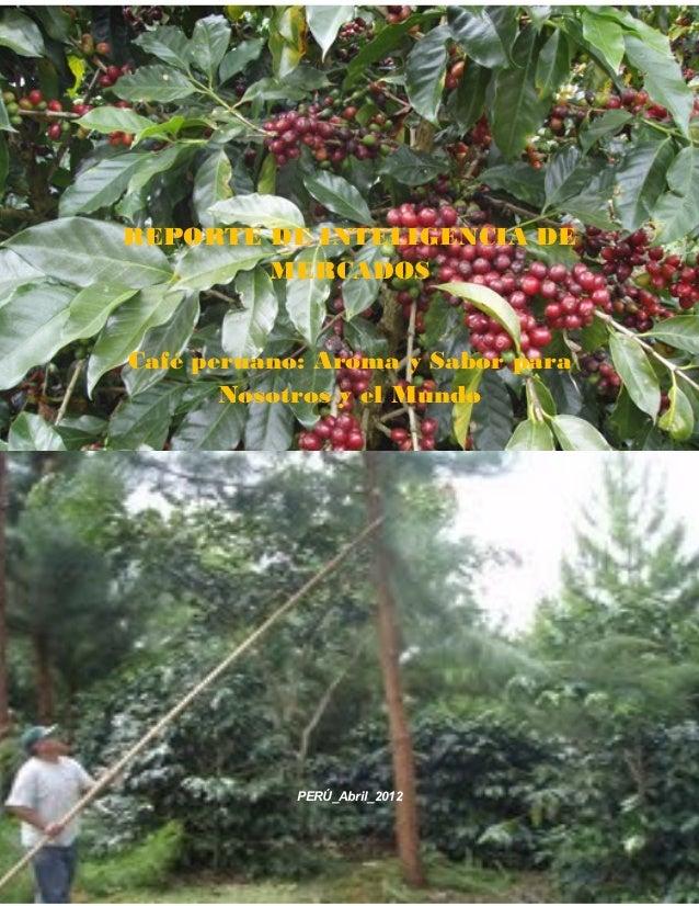 Informe de inteligencia de mercado del café 2012