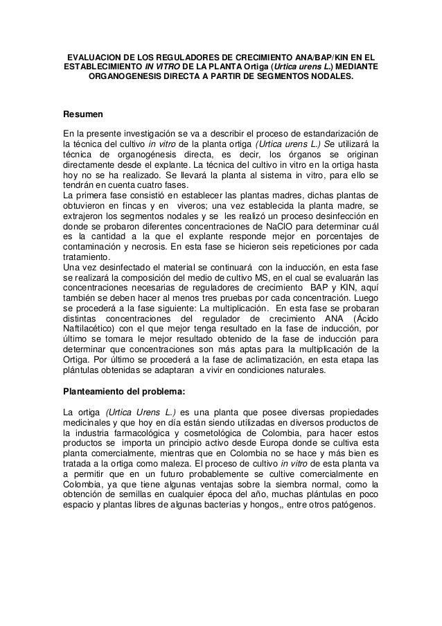 EVALUACION DE LOS REGULADORES DE CRECIMIENTO ANA/BAP/KIN EN EL ESTABLECIMIENTO IN VITRO DE LA PLANTA Ortiga (Urtica urens ...