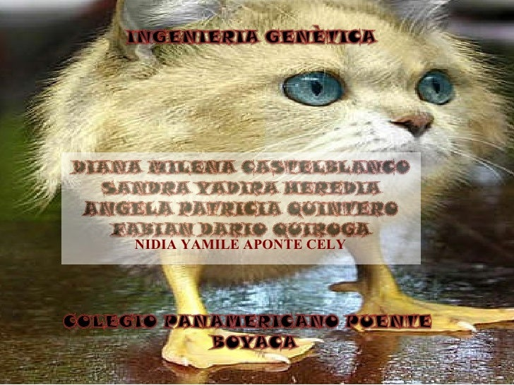NIDIA YAMILE APONTE CELY
