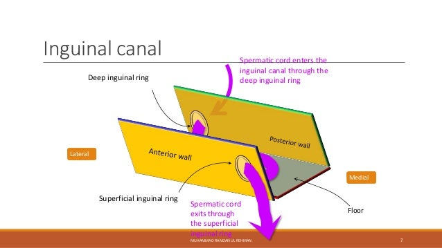 Inguinal Canal Inguinal canal Medial Floor