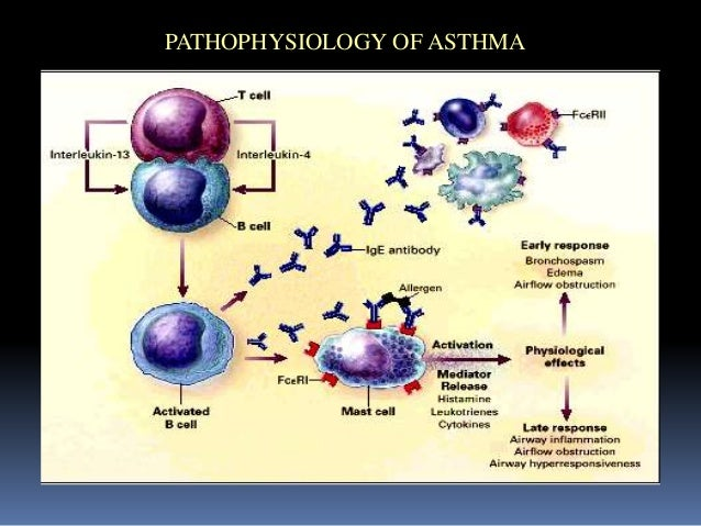 asthma medication inhaled steroid