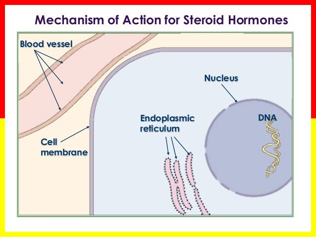 corticosteroid hormone replacement