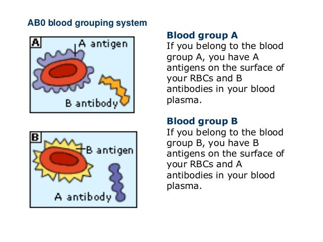 Abo blood group genetics hot
