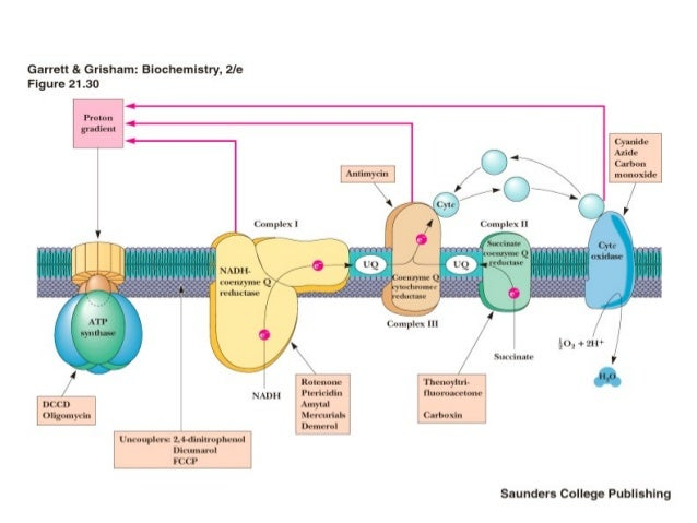 anabolic processes in human skeletal muscle